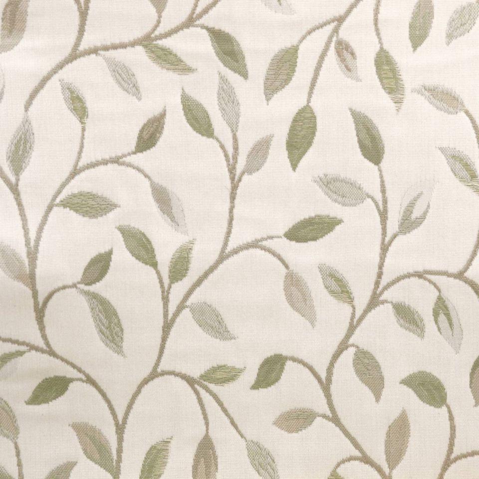 cervino lichen